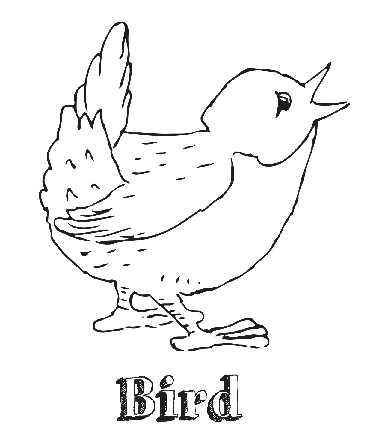 bird coloring pages dltk - Dltk Colouring Pages