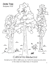 doodles-california-state-book-image-1